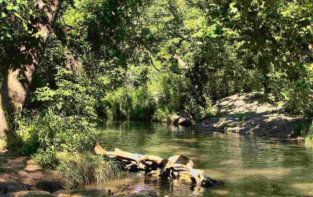 Up the Creek Trail -- Summer