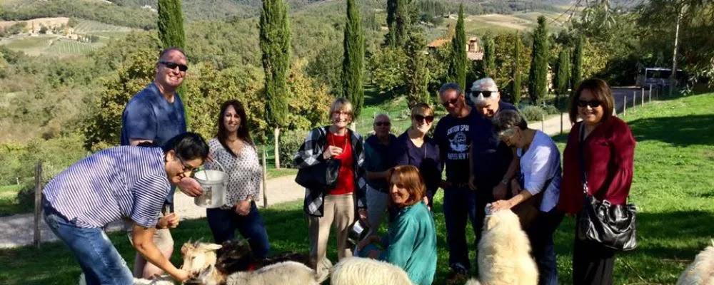 swimming pool, Chianti, bed & breakfast, Italy, accommodation, hospitality exchange, volunteer, voluntouring