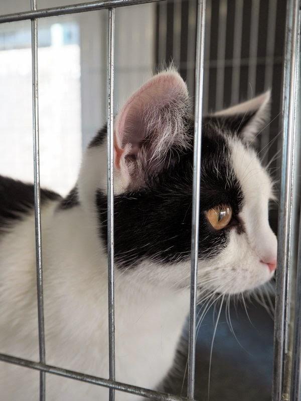cat shelter belgium