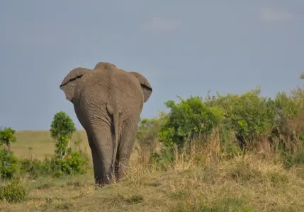 عطلة شهر العسل في كينيا