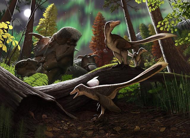 Fossil jawbone from Alaska is a rare case of a juvenile Arctic dromaeosaurid dinosaur