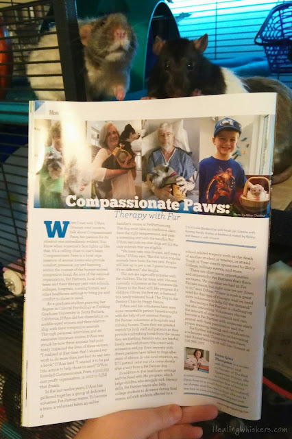 Vincent the therapy rat with an article about compassionate paws