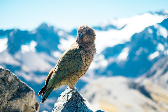 Going up: birds and mammals evolve faster if their home is rising