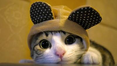 image de chat gratuite