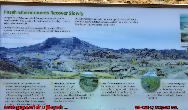 Mount St Helens Environment Info
