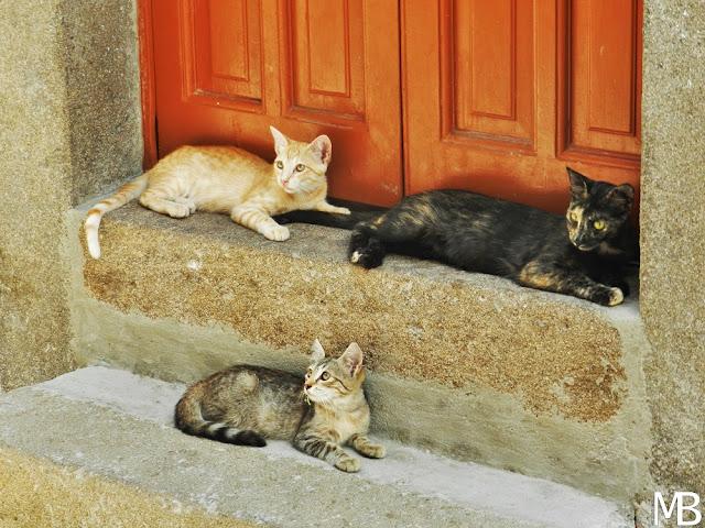 lipari isole eolie gatti