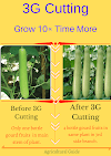 3G Cutting Process And Benefits
