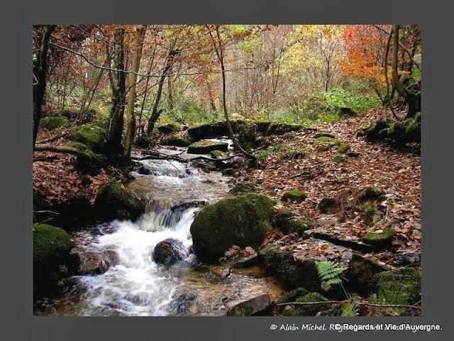 sous-bois, ruisseau arbres fraîcheur, été