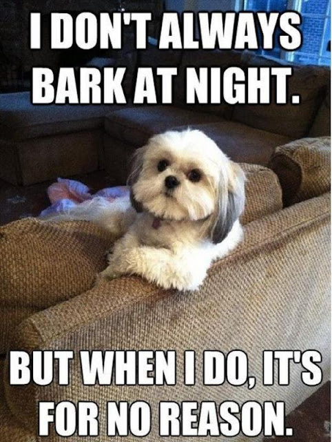 I don't always bark at night but when I do, it's for no reason