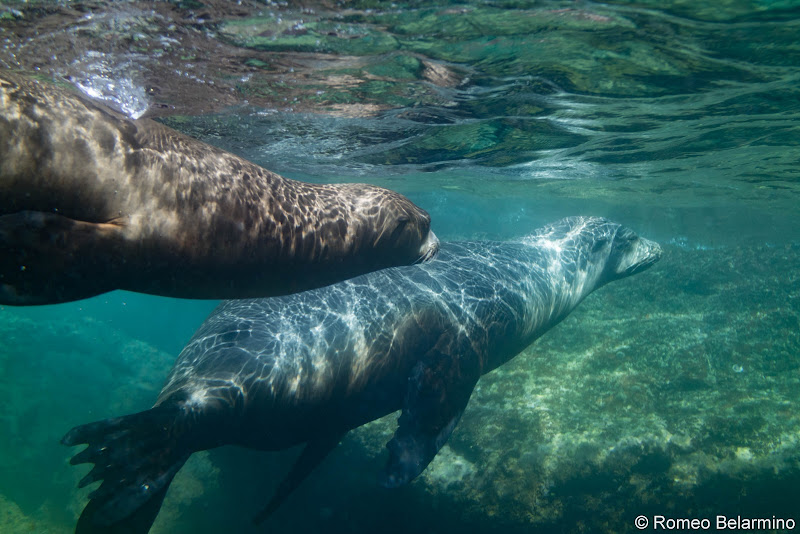 Pair of Sea Lions Things to Do in La Paz Mexico