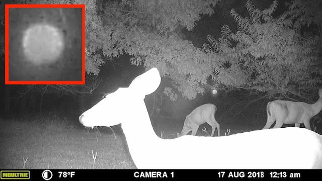 Orb Caught On Animal Forest Cam Observing Deer Cloak%252C%2B%25D0%259D%25D0%259B%25D0%259E%252C%2BGalaxy%252C%2B%25D8%25AC%25D8%25B3%25D9%2585%2B%25D8%25BA%25D8%25A7%25D9%2585%25D8%25B6%252C%2BUFO%252C%2BUFOs%252C%2Bsighting%252C%2Bwar%252C%2Bsightings%252C%2BCarina%252C%2BNebula%252C%2BStar%2BTrek%252C%2BStargate%252C%2Btop%2Bsecret%252C%2BET%252C%2Batlantis%252C%2BW56%252C%2BSteve%252C%2BGod%252C%2Borb%252C%2Binfrared3