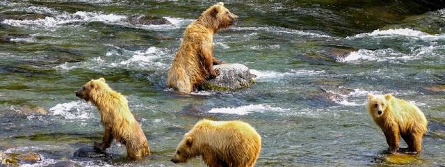 Trail ridge air inc bear viewing