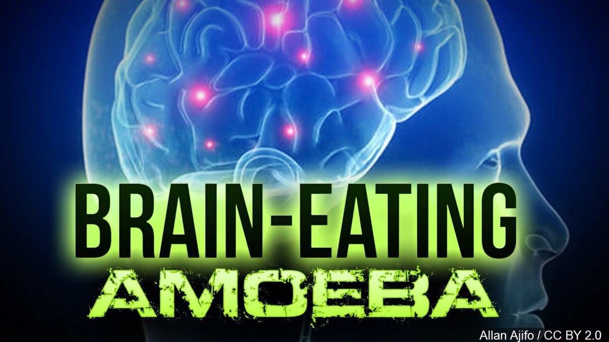 Naegleria fowleri: Brain-Eating Amoeba