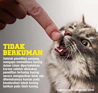 Nama Nama Kucing Nabi Muhammad Saw 81021 Nama Untuk Kucing Comel Lucu Dan Unik