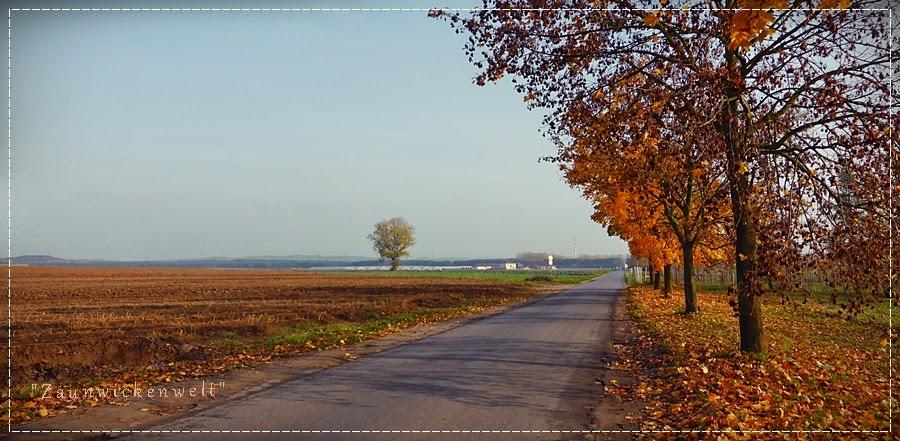 http://zaunwickenwelt.blogspot.de/2014/11/am-sonntag-lichtete-sich.html