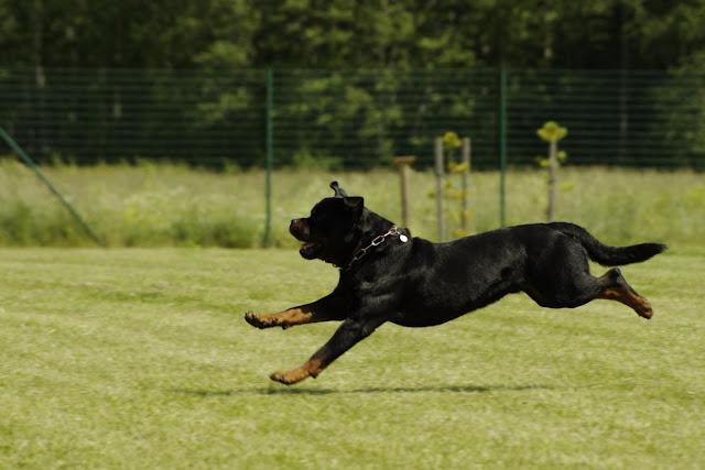 Why do dogs run barking behind running cars?  आखिर चलती गाड़ी और बाइक के पीछे क्यों भागते हे कुत्ते?