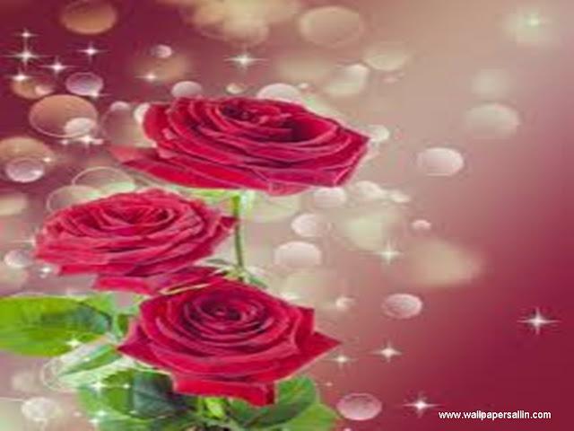 Rose Wallpaper -8
