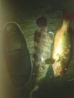 Tips Mancing Ikan Kerapu di Muara Sungai
