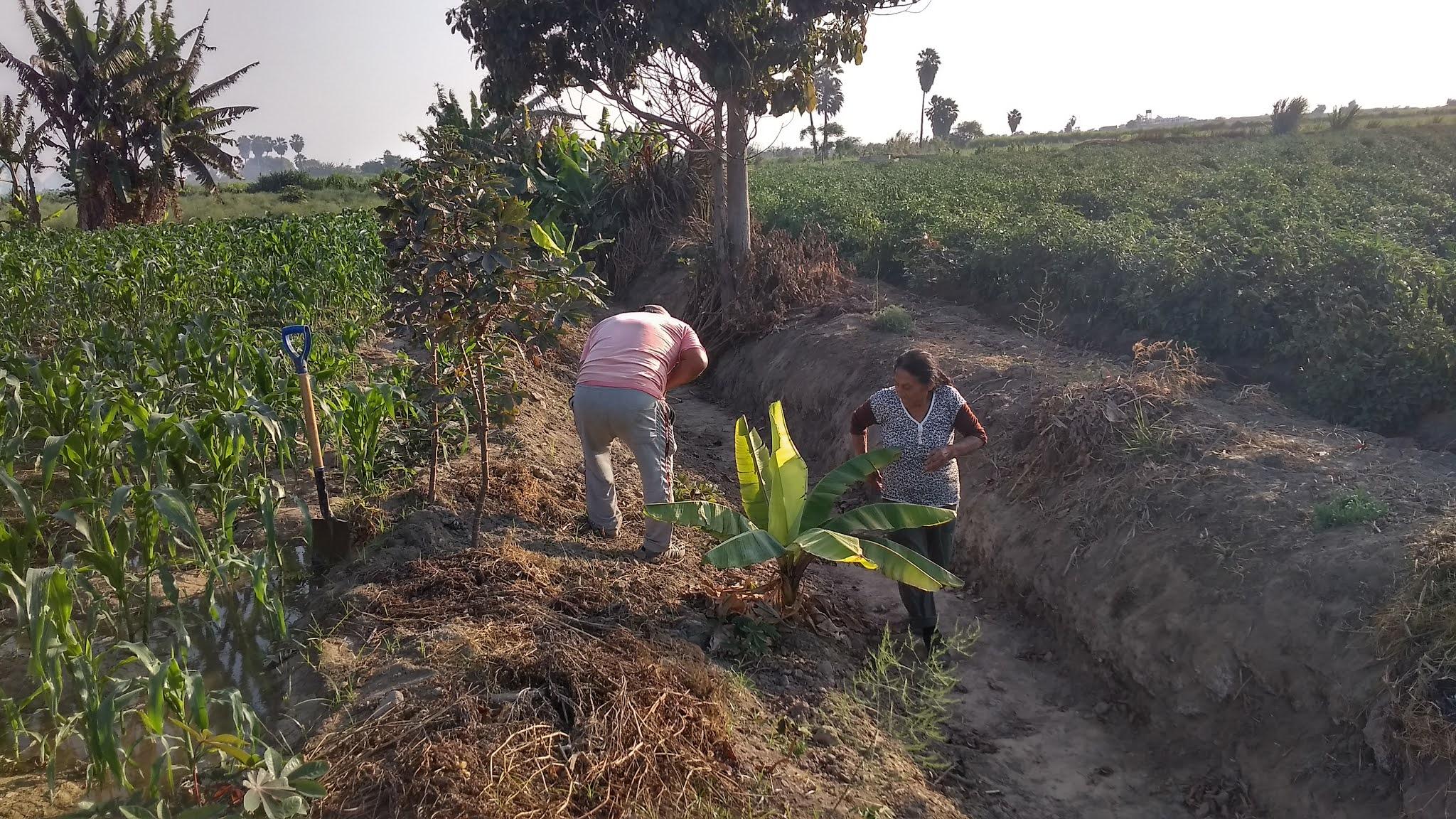Personas trabajando en el campo, Río Seco, La Libertad, Perú (Distrito de Razuri)