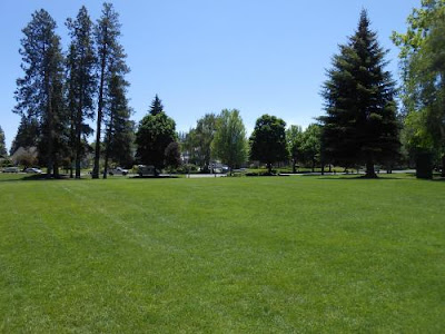 ground, baseline emotions, park, green grass, blue sky,