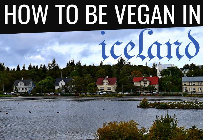vegan in iceland