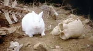 """Little Molu: Rabbit with Long Fangs"""""""