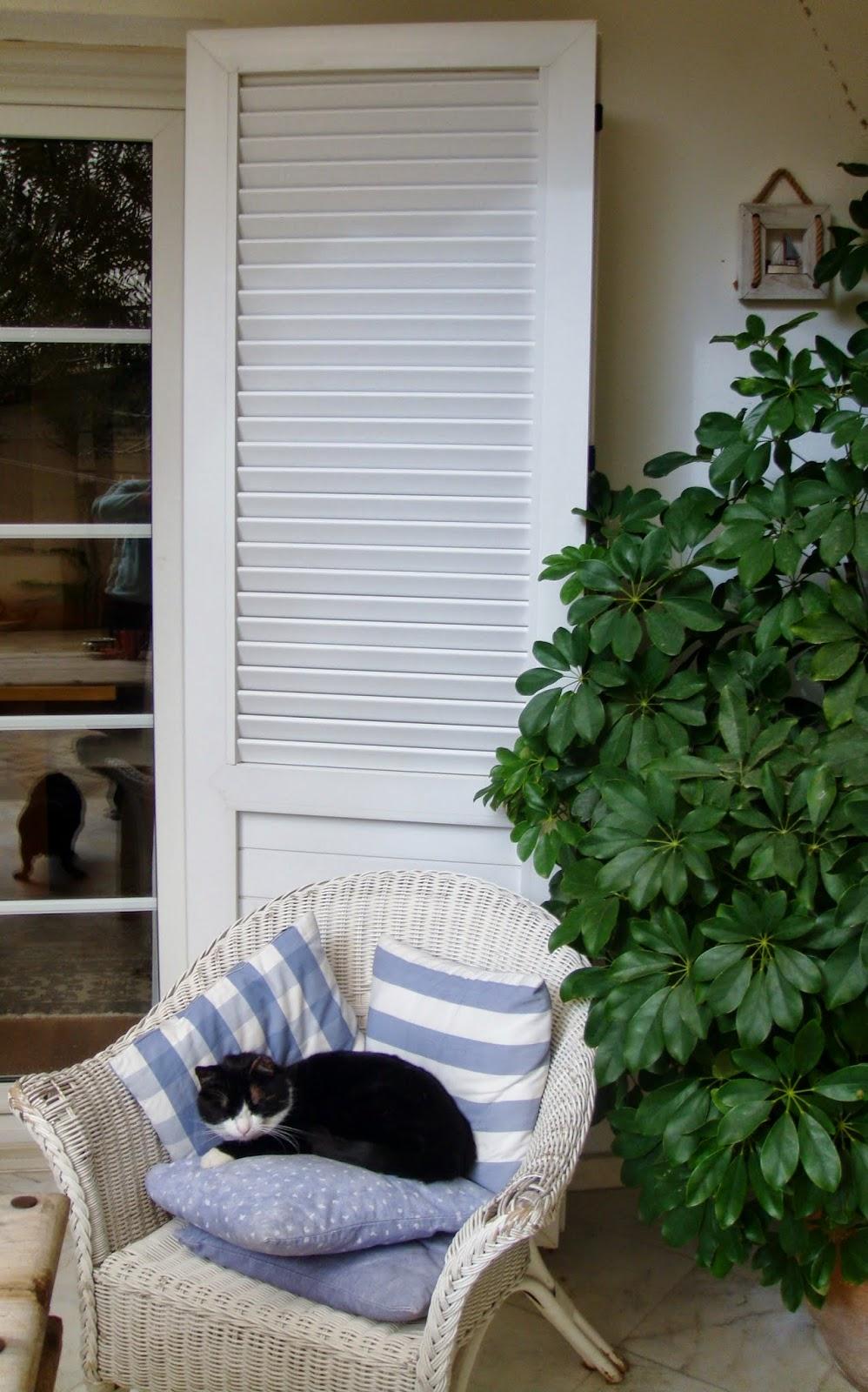 Clean, white shutters