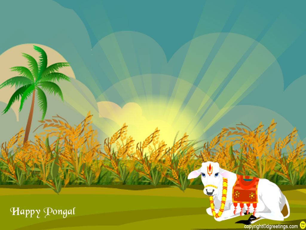 free greeting cards  download cards for festival  pongal