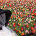 There be the tulips! - April 19 </br><small> Lisse to Wuppertal </small>