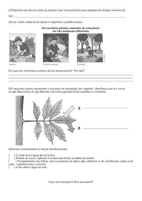 avaliação de ciencias 4o ano plantas