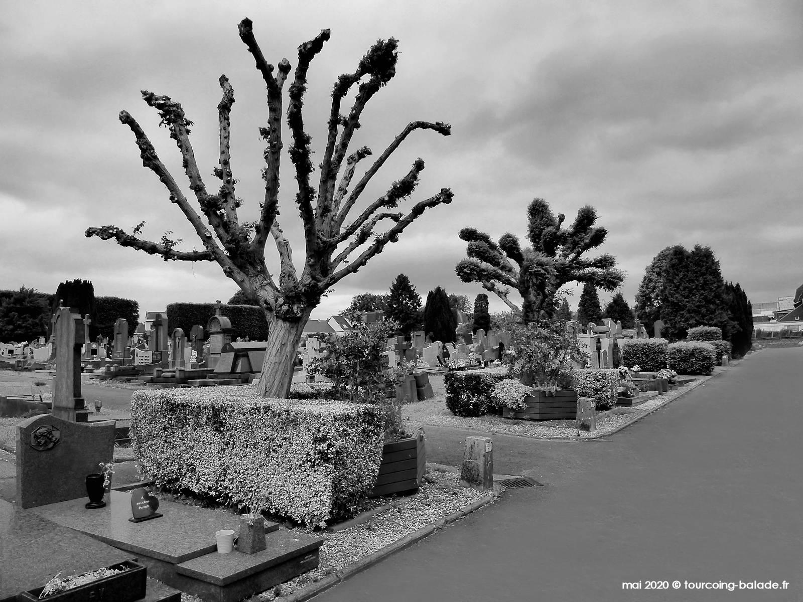 Joshua Tree, cimetière du Blanc Seau, Tourcoing 2020
