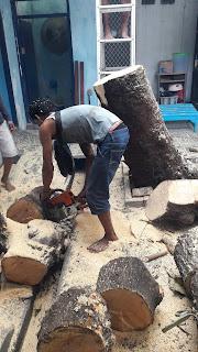 Tebang pohon surabaya di daerah Wiyung