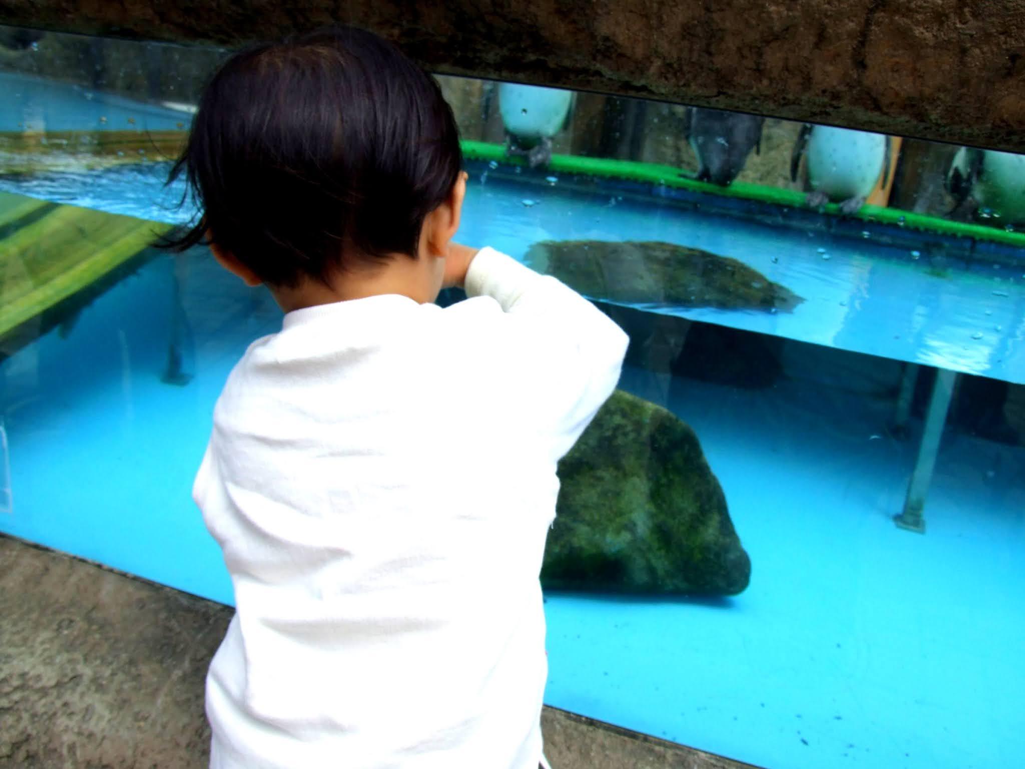 ペンギンの水槽を覗き込む可愛い小さな子どもの後ろ姿の写真素材です。