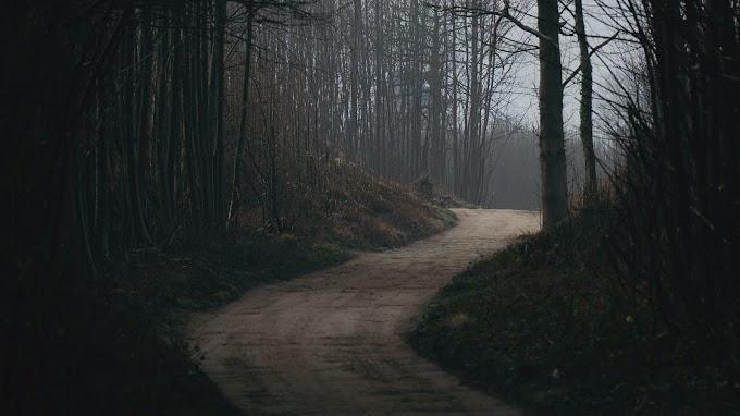 Papel de Parede Estrada na Floresta Negra