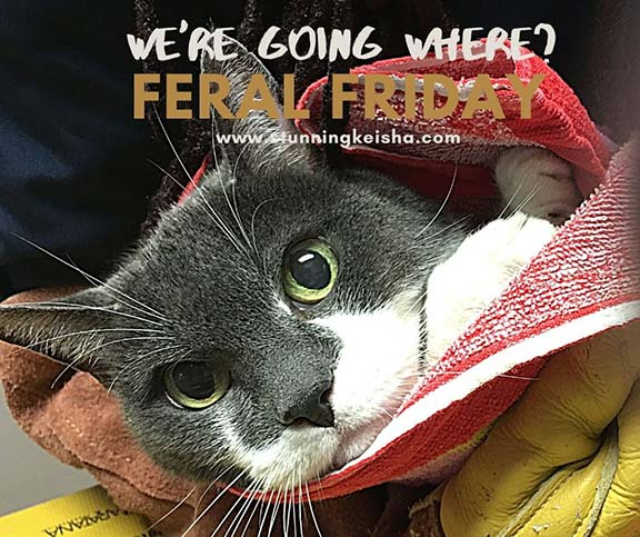 Feral Friday: We're Going Where???