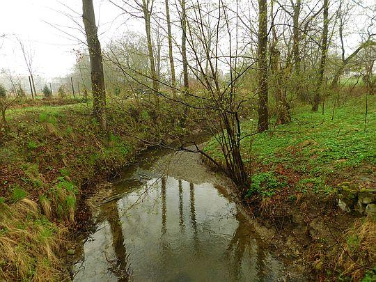 Potok Dąbrówka.