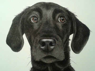 Black Labrador Pet Portrait Oil on Canvas