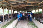 Pemeriksaan Antemortem pada ternak sapi di Kelurahan Beringin dan Kelurahan Bunut