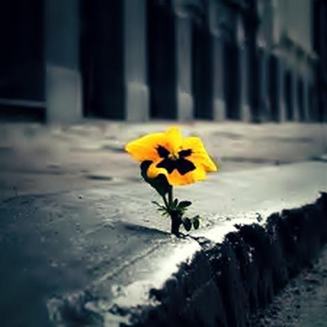 Reflexão Poesia Esperança Flores