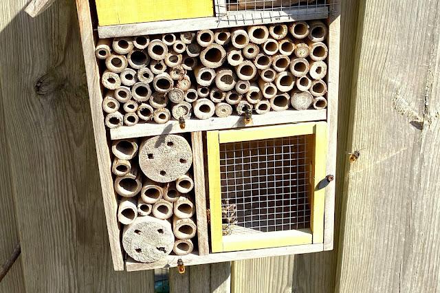 Knuffelbijen overwinteren