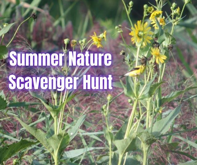 Summer Nature Scavenger Hunt (Printable)