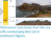 http://sciencythoughts.blogspot.com/2019/02/pleistocene-land-snails-from-sea-cliffs.html