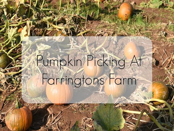 Pumpkin Picking At Farringtons Farm