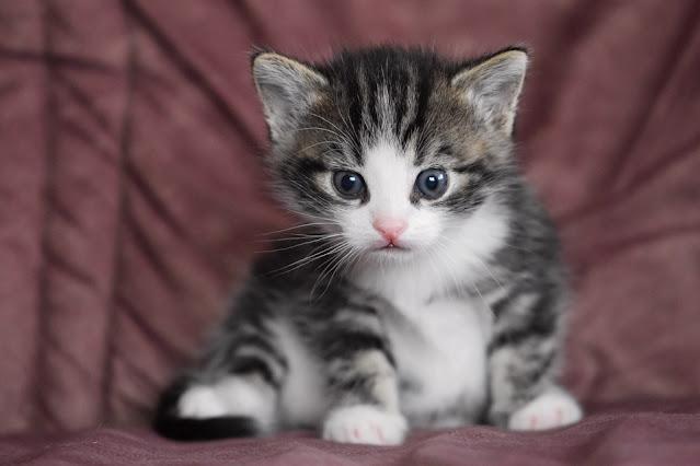 foto kucing imut dan lucu banget