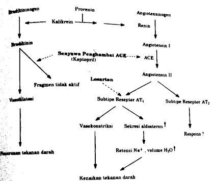 Mekanisme kerja antihipertensi senyawa penghambat ACE