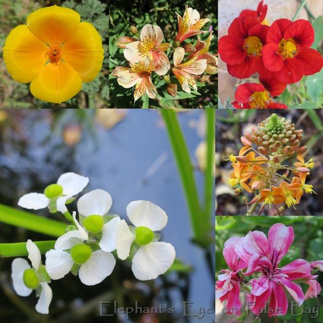 November more flowers