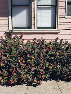 A picture of flowers surrounding a San Francisco house