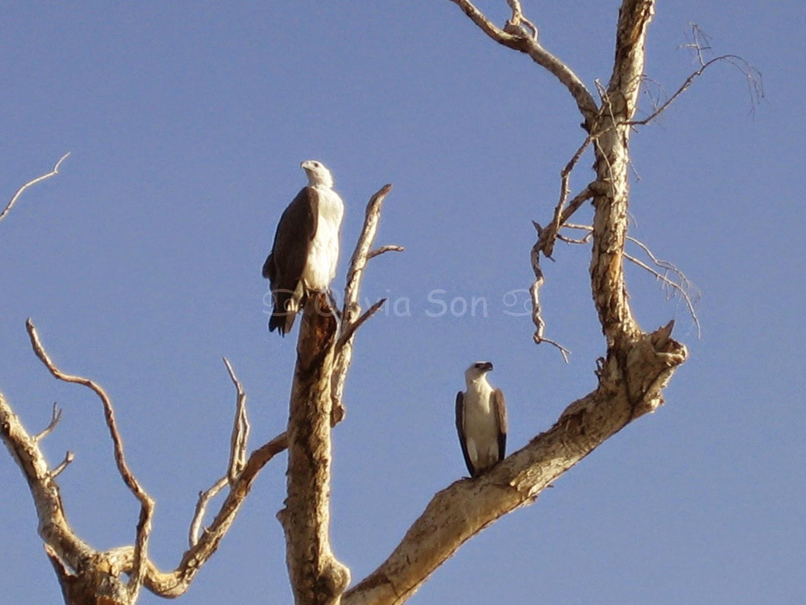 Kakadu National Park, Northern Territory, Australie