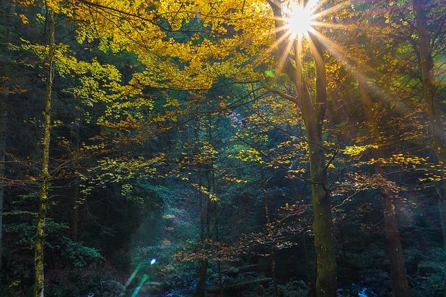 ảnh nắng mùa thu thật đẹp