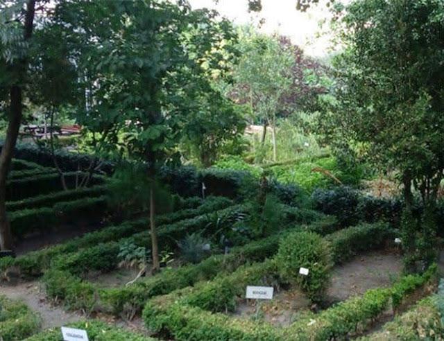 Armenia busca duplicar área forestal para 2050